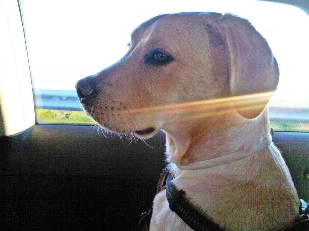 Pas i putovanja