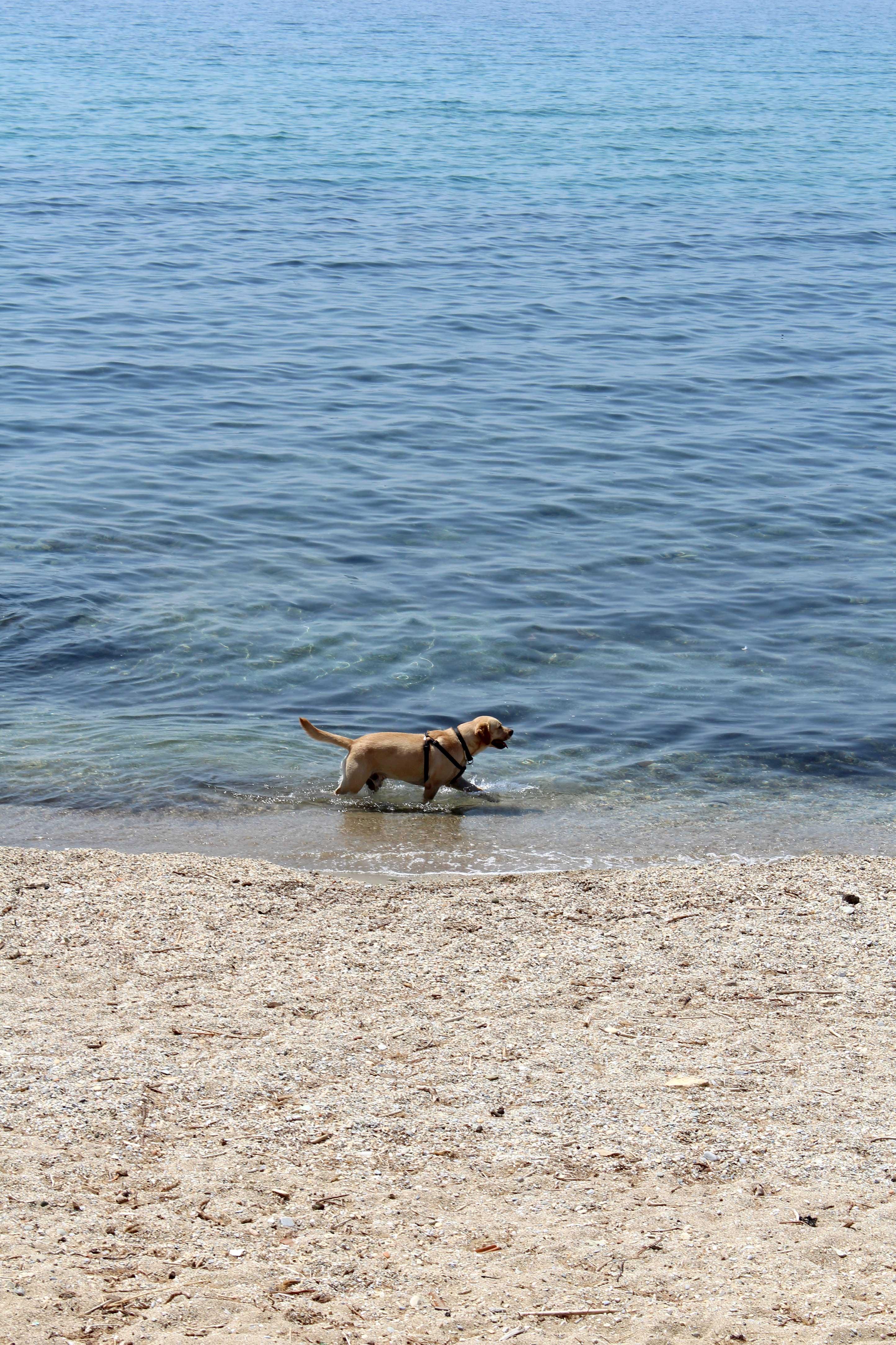 Pas Nio na gradskoj plazi